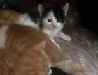 小萌貓找媽媽