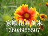 蛇鞭菊批发_供应品种好的宿根花卉