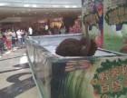 鹦鹉百鸟展出租萌宠展览羊驼宠物租赁