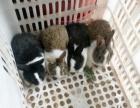 迎六一宠物兔特卖中