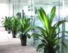 青岛绿手指园林一站式服务绿植租摆租赁
