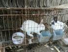 旅行兔业生态兔肉出售