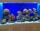 深圳上门清洗鱼缸 鱼缸维护维修等后期服务
