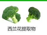 萝卜硫素1%-10% 天然西兰花提取物 萝卜硫苷