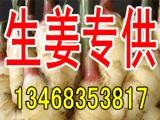 河南生姜产地种植基地