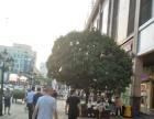 步行街 正步行街中心 商业街卖场 10平米