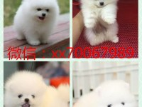 郑州免费领养宠物狗