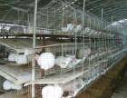 肉兔养殖 比利时杂交野兔价格 山东优越兔业 养殖肉兔技术