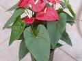 上海办公室绿植盆栽租赁植物租摆漕河泾古美路虹梅路田林路宜山路
