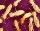 佛山南海灭白蚁公司