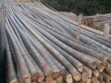 徐水植树杆绿化竹竿