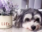 出售各种名犬,宠物借配。宠物美容