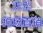 深圳养殖场 直销各种狗狗 三年可退换一终生免费服务