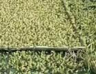 枝江汇泽青蛙养殖用实际行动告诉养殖户我们的扶持政策