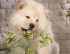 松狮犬出售了武汉狗场,品相很好了活泼聪明 大型犬特价