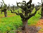 法国红酒进口商进口葡萄酒代理商原瓶加盟代理经销商如何做红酒