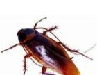 江都专业灭老鼠.蟑螂.蚊蝇.白蚁.等各类害虫