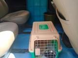 温州活体托运 宠物专车 检疫证办理 全程护理
