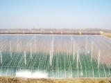 供应潍坊优质的日本明净华进口PO膜 大量供应日本进口PO膜