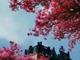 麻城龟峰山风景区 登峰酒家 餐饮、住宿