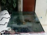 日本锦鲤 红白 单三 茶鲤 浅黄 地缸全套设备出让