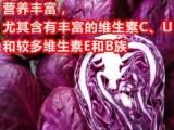 长期销售紫甘蓝种子,紫色蔬菜种子,优质雪莲果种球