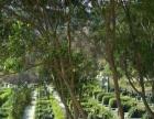 圣水陵园,较美丽后花园