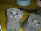 家养猫猫只卖个人 猫贩子滚