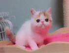 加菲猫弟弟 预定 超美