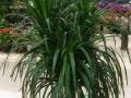 南通专业植物、花草、盆景租赁及养护服务