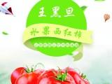 普罗旺斯西红柿 水果西红柿 诚招城市合伙人