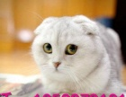 高价收猫 成猫、幼猫 全国寻找宠物店合作伙伴