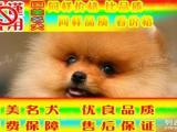 博美犬抵制无良商贩 且买且谨慎 周六日特惠