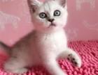 高颜值各种精品猫咪宝宝找新家