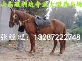 半血马和伊犁马杂交马哪里有卖的?多少钱一匹