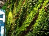 佛山植物墙绿植墙