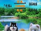佛山专业宠物托运广州/佛山出发到省内汽车省外火车空运