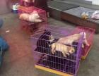郑州宠物托运:火车 汽车 航空,价格低 安全 快捷