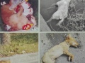 上海宠物火化 上海宠物无害化处理接收点