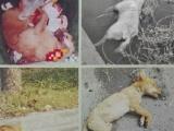 上海寵物火化 上海寵物無害化處理接收點