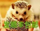 出售日本飞鼠魔王金花红腹松鼠天竺仓鼠垂耳兔米非