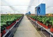 花卉大棚温室-山东靠谱的花卉大棚温室
