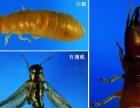 中山卫士灭白蚁、蟑螂、老鼠、苍蝇、蚊子等服务