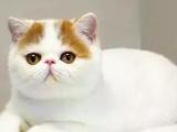 无锡那里有加菲猫