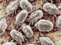 空调洗一洗,呼吸更健康拒绝螨虫和霉菌