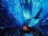 唐山欢乐季港澳游四天三晚海洋公园仅需