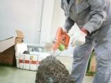 广州低价灭白蚁公司,挖巢灭白蚁,科学诱杀白蚁