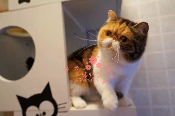西安哪里的加菲猫比较便宜健康 西安什么地方可以买到加菲猫