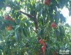 水果蔬菜大型采摘园