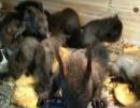出售各类松鼠幼崽,蜥蜴爬宠